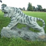 Siberian Tiger on Rock Green