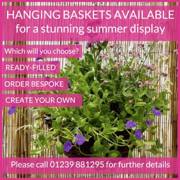 Hanging Baskets Available