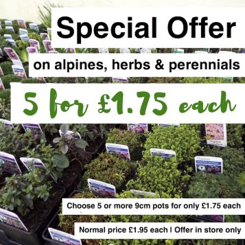 Special Offer on Alpines, Herbs, Perennials
