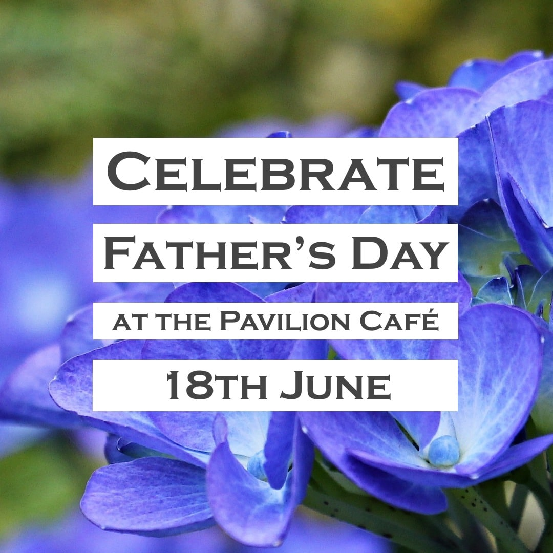 Celebrate Father's Day at Penrallt Garden Centre