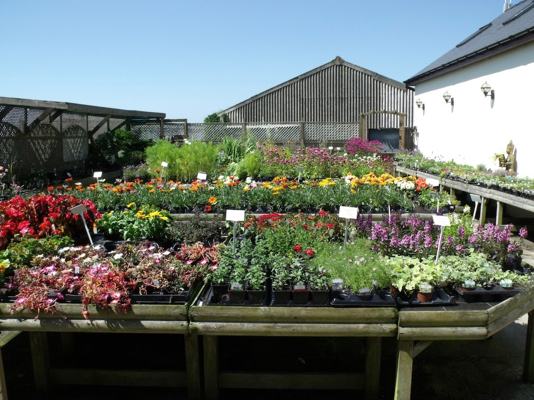 Seasonal plants at Penrallt Garden Centre