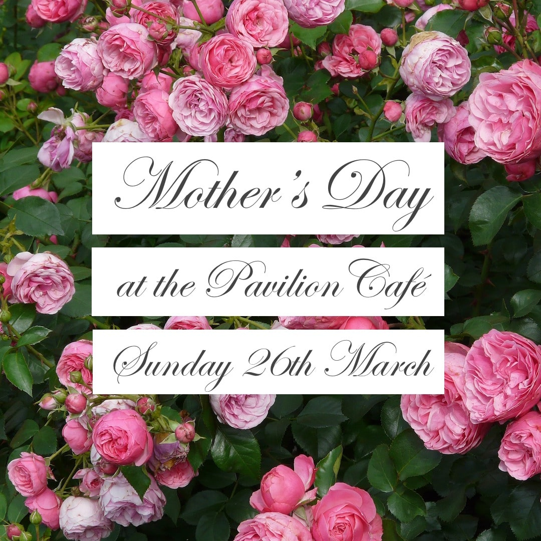 Mother's Day At Penrallt Garden Centre