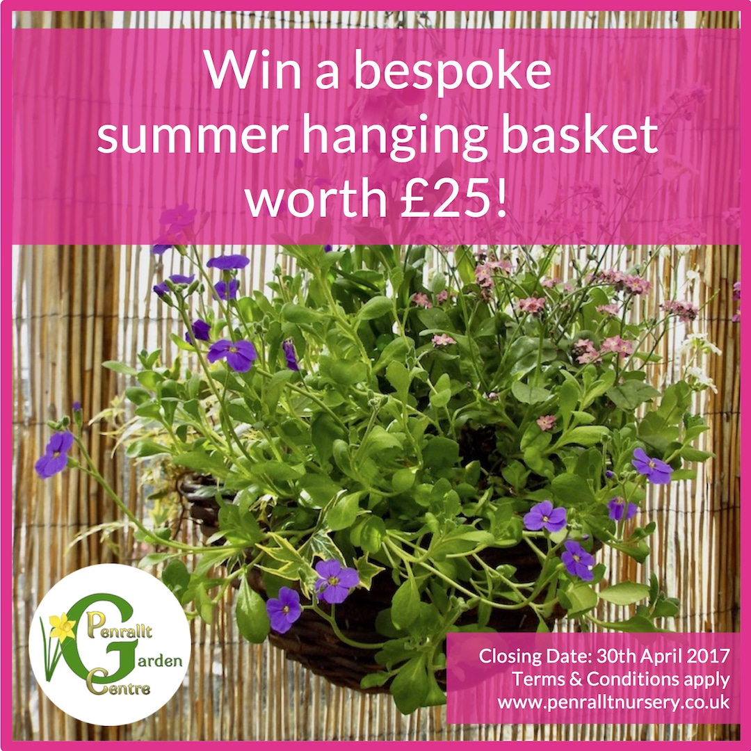 £25 Bespoke Summer Hanging Basket