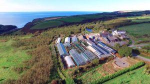 penrallt-garden-centre